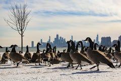 芝加哥与鹅的地平线视图从蒙特罗斯港口 图库摄影