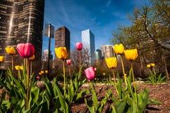 芝加哥摩天大楼在春天 免版税库存图片