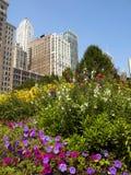 芝加哥摩天大楼 库存照片