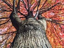 芝加哥秋天树 免版税库存照片
