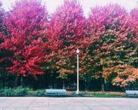 芝加哥秋天树 库存图片