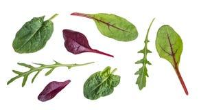 芝麻菜、红色甜菜、菠菜和唐莴苣叶子  免版税库存图片
