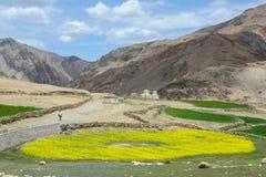 芥末花田晴天在拉萨,西藏,中国 免版税图库摄影