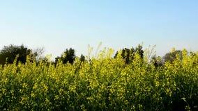 芥末领域在一个大风天 影视素材