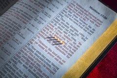 芥菜籽和开放圣经 库存照片