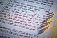 芥菜籽和开放圣经 免版税库存图片