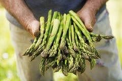芦笋在农夫的手上 免版税库存图片