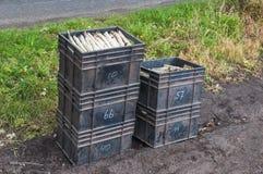 芦笋配件箱收获了塑料 库存照片