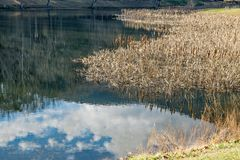 芦苇、鱼池和反射 免版税库存照片