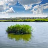 芦苇丛林在湖的 库存照片