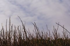 芦苇云彩和天空行和看法,在一串沿海足迹在Pacifica,加利福尼亚 免版税库存图片