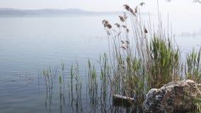 芦苇反对天空蔚蓝的草背景风景  免版税库存图片