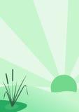 芦苇和太阳 库存照片