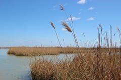 芦苇和沼泽地自然保护Delta del Po二的威尼托,意大利 免版税库存照片