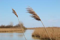 芦苇和沼泽地自然保护Delta del Po二的威尼托,意大利 库存照片