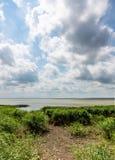芦苇和积云在Curonian盐水湖,俄罗斯的海岸 图库摄影