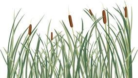 芦苇和绿草背景 图库摄影