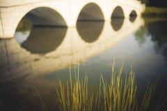 芦苇和金黄桥梁的反射 免版税库存照片