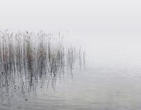 芦苇和水 库存图片