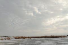 芦苇在一个冻湖 免版税库存图片