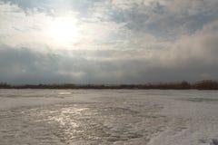 芦苇在一个冻湖 免版税图库摄影