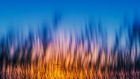 芦苇在日落的湖 库存图片
