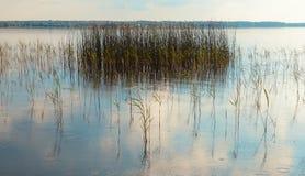 芦苇在湖 免版税库存照片