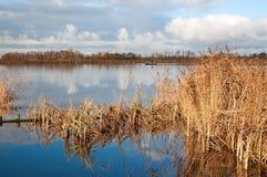 芦苇在称Geeuw的荷兰语河 免版税库存照片