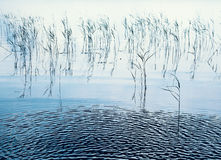 芦苇在水中 库存照片