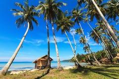芦苇小屋和可可椰子 库存图片