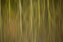 芦苇床和树的抽象反射在寂静的水中 库存照片