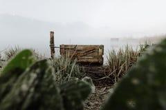 冻芦苇沼泽地kochelsee巴伐利亚薄雾雾 库存图片