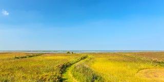芦苇的全景图象在荷兰艾瑟尔湖前面的 库存照片