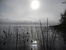 芦苇的反射在水中在一个有薄雾的早晨 图库摄影