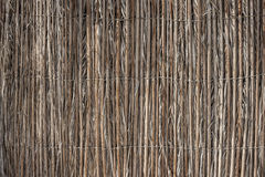 芦苇茎的墙壁 免版税库存照片
