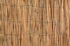 芦苇设计的纹理背景  库存图片