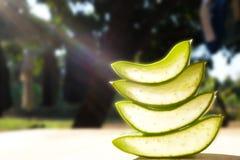 芦荟在木头切的维拉在自然本底中 库存图片