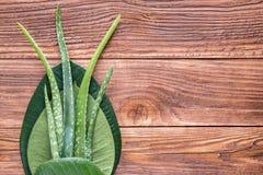 芦荟在木桌上的维拉叶子 库存图片