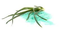 芦荟浴新鲜的盐 免版税库存照片