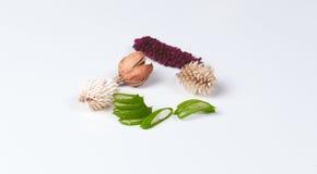 芦荟维拉和干燥植物 库存照片