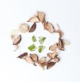芦荟维拉和干燥植物 免版税库存照片