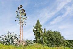 芦荟维拉花和狂放的植被 免版税图库摄影