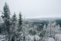 芬兰冬天 免版税库存图片