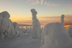 芬兰拉普兰在冬天 库存照片