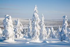芬兰拉普兰 库存照片