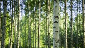 芬兰森林 免版税库存照片