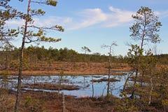 芬兰沼泽地风景春天 免版税库存图片