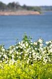 芬兰海湾视图 库存图片
