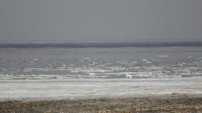 芬兰湾的全景有冰的在顶房顶海岸的毛毡和雁形目鸟在春天好日子 股票录像