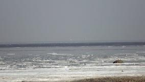 芬兰湾的全景有冰的在顶房顶海岸的毛毡和雁形目鸟在春天好日子 影视素材